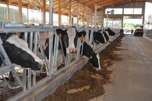 Pokrajina  finansira opremanje stočarskih farmi