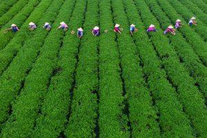 Kina povezuje 53,3 miliona hektara oranica