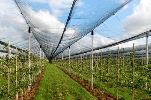 Saveti za prolećnu sadnju voćnih sadnica