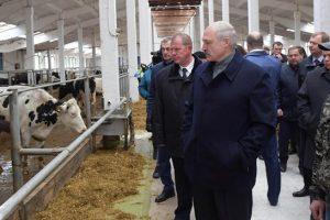 Belorusija: Lukašenko užasnut stanjem krava