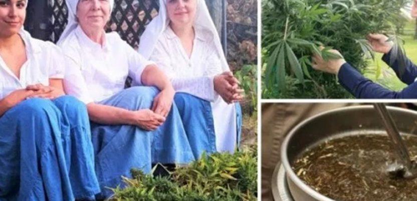 Tri časne sestre zaradile skoro milion evra od marihuane