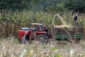 Beogradskim poljoprivrednicima bespovratna sredstva