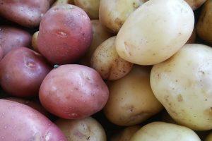 Dobra zarada od mladog krompira