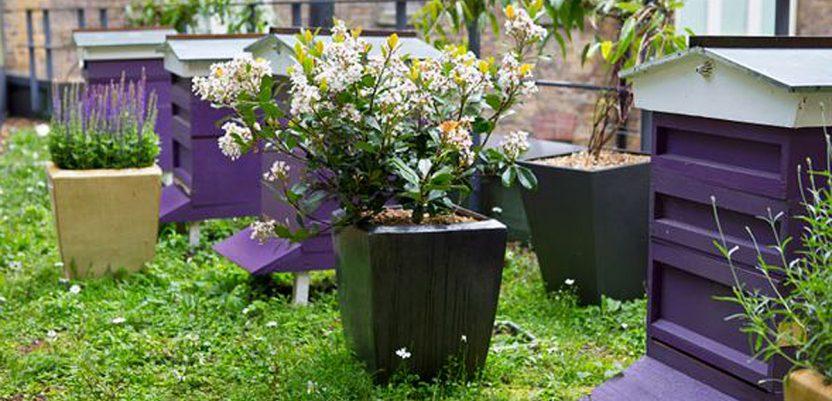 Urbano pčelarstvo dobra prilika za Beograđane