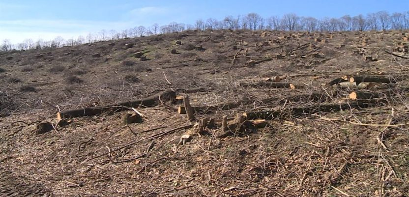 Seča hektara šume na Fruškoj gori na zahtev SPC