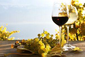 Osnovana Balkanska vinska mreža