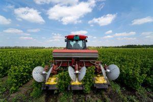 Proizvodnja lešnika – nova prilika za srpsku poljoprivredu