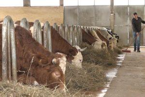 Mladi poljoprivrednici se sve više bave stočarstvom