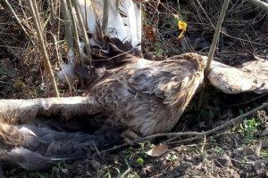 Akcija sprečavanja trovanja ptica u Srbiji