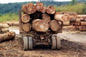 BiH: Uskoro zabrana i ograničenje izvoza šumske građe
