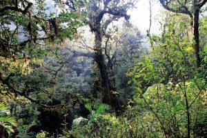 Svet u 2018. ostao bez 12 miliona hektara tropskih šuma