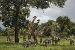 UN: Milion ugroženih vrsta na planeti