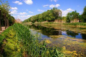 EU čisti Veliki bački kanal