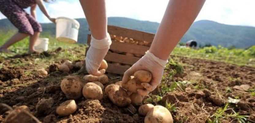 E-prijavu sezonaca, pored poljoprivrede, primeniti i na druge delatnosti