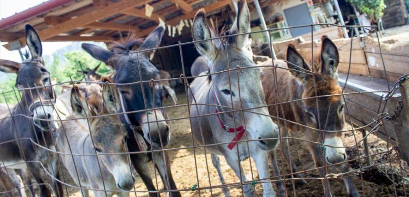 Crna Gora: Muzej magaraca kod Danilovgrada
