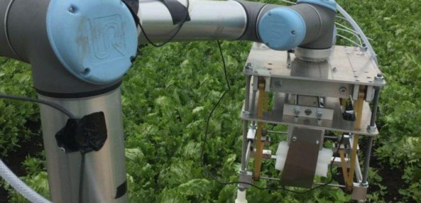 """Robot """"Vegebot"""" bere salatu u Kembridžu"""