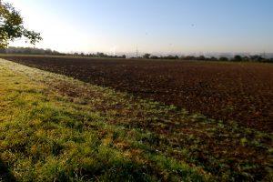U prvih pola godine najviše njiva vraćeno u Vojvodini