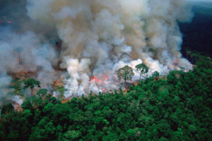 Amazonske zemlje sklopile savez protiv uništenja prašume