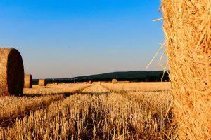 Osim proizvodnje struje EPS se bavi i poljoprivredom