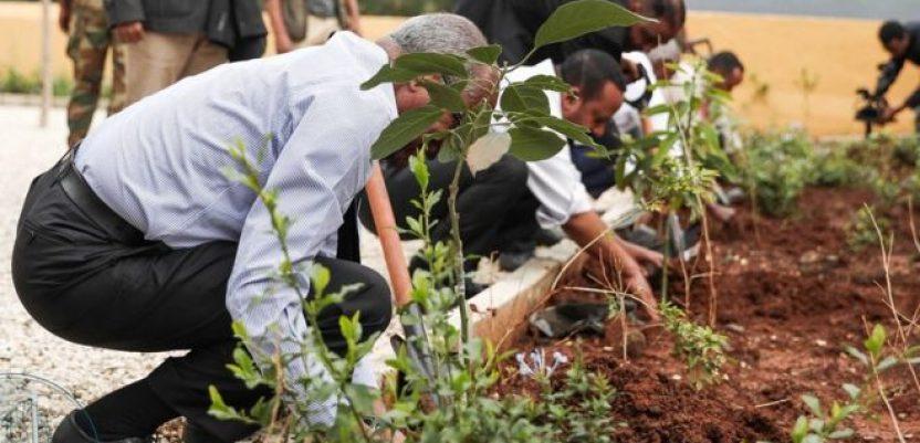 Etiopija oborila svetski rekord u broju zasađenih stabala
