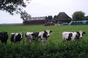 """Projekat """"narodna farma"""" zaživeo u Holandiji"""