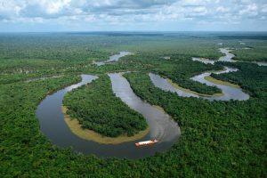 U Amazoniji ipak nisu pluća planete