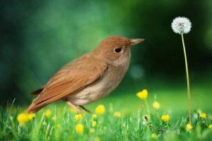 Populacija ptica u Severnoj Americi smanjila se za trećinu