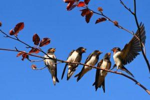 Organska proizvodnja dobra za ptice