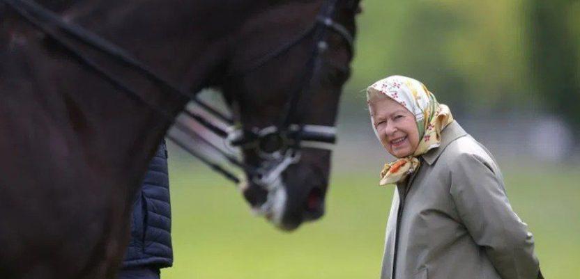 VB: Kraljica traži konjušara