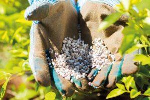 Iscrpljuju se nalazišta fosfata u svetu