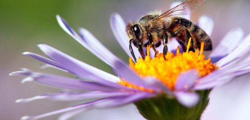 Pčele proglašene najvažnijim bićima na Zemlji