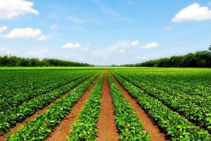 Somborski stočari zbog restitucije ostali i bez zemlje