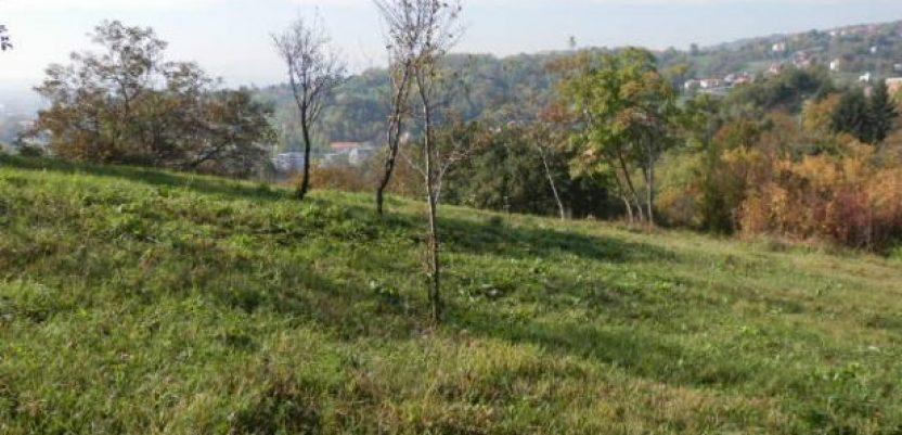 Masovna kupovina šuma i livada u istočnoj Srbiji