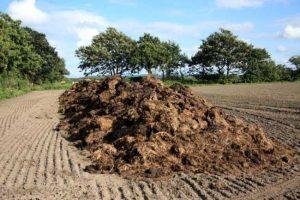 Stajsko đubrivo dobro za zemljište, ali i dobar izvor zarade