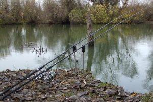 Kako sačuvati riblji fond na Dunavu?