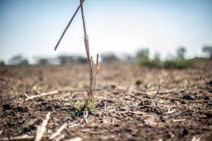 EU uvodi mere za bolje upravljanje zemljištem