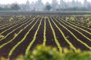 U planu gradnja poljoprivrednog kompleksa kod Sombora