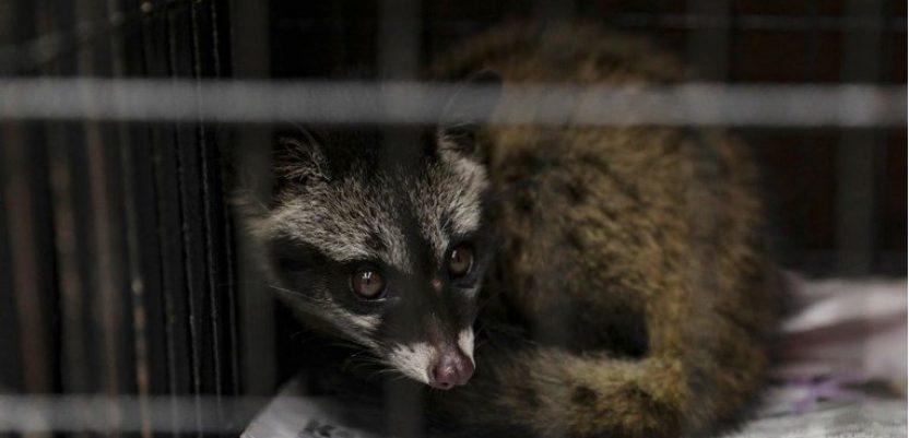 Kina privremeno zabranila trgovinu divljim životinjama