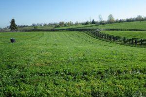 Paori u Vojvodini pašnjake pretvaraju u obradive površine?