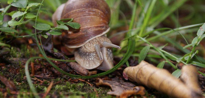 Zabranjeno sakupljanje 17 zaštićenih vrsta flore i faune