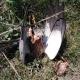 Kod Bačke Topole otrovano 18 ptica i životinja