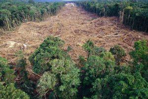 Afrika ubrzano gubi šume