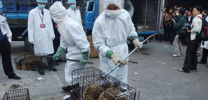 Vuhan zabranio korišćenje mesa divljih životinja za jelo
