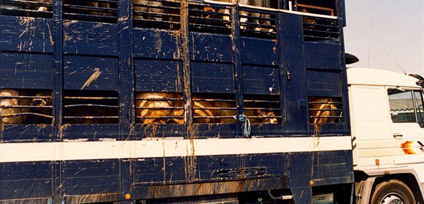 EU ispituje kršenja pravila u transportu životinja