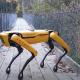 Pas robot nadgleda useve i čuva ovce