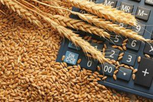 Kalkulacije ZSV: Cena koštanja pšenice 21,06 din/kg
