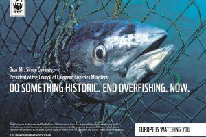 WWF upozorava na prekomernu eksploataciju ribe