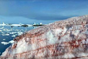Naučnici zabrinuti zbog roze snega i leda na Alpima