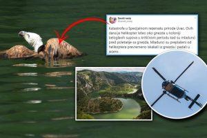 Zašto se skriva ubica zaštićenih ptica nad Uvcem?