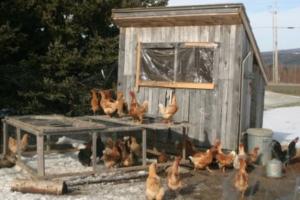 Od šupe do kokošinjca, porez mora da se plati